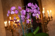 Orchids Biltmore Hotel