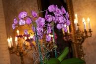Orchids Biltmore Hotel